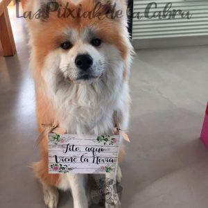 Cartel xs para bodas para bebés y perros